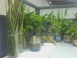 Best Plant For Office Desk Why You Must Experience Plants For Office Desk At
