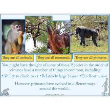 evolution and inheritance human evolution planbee