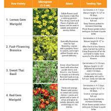 Edible Flowers Edible Flower Seed Mat Led Habitats