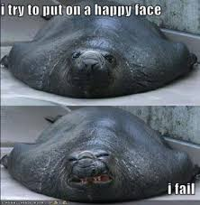 Walrus Meme - the story of the lolrus and his bukkit is my geek showing