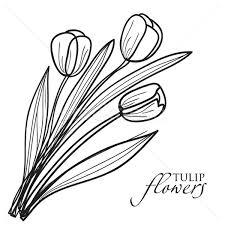 tulip flowers sketch vector illustration maria cherevan