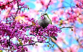 Flower And Bird - flower bird blossoms pink flowers beautiful buds lovely