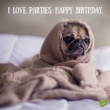 Happy Birthday Pug Meme - cracking birthday jokes huge list of funny messages wishes