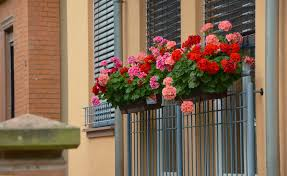 free images plant home wall summer railing color facade