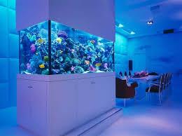 15 best aquarium decoration ideas images on a tank