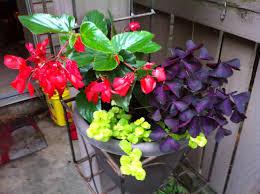 annuals u2013 garden grow