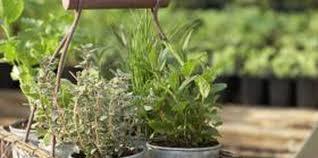 the pot size for indoor vegetable gardening