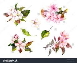 Image Of Spring Flowers by Apple Blossom Cherry Flowers Sakura Watercolor Stock Illustration