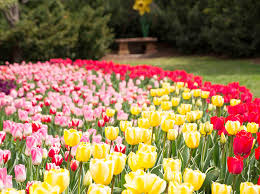 2017 tulip festival presented by thanksgiving point