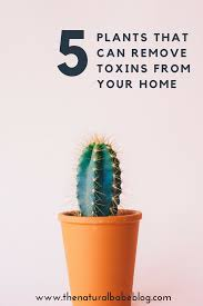 5 air purifying plants indoor plants that clean the air and
