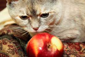 homemade diet for cats with kidney failure cuteness