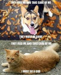 Feed Me Meme - meme dog they feed me and take care of me they must be gods