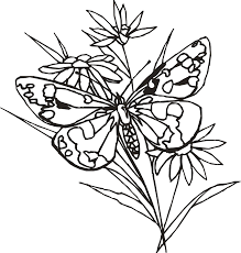 butterfly and flower drawings clip art library
