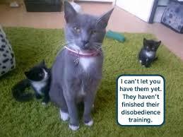 Kittens Memes - kittens not at maximum fun level lolcats lol cat memes