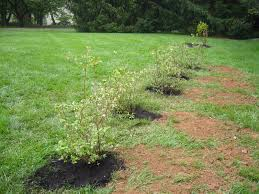 planting a native hedge 2 green acres
