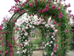 most beautiful rose gardens in the world google search english