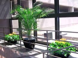 Office Plants by Office Plants Jersey