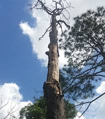 Classic Tree Brisbane Northside Classic Tree Lopping Call 0417764517