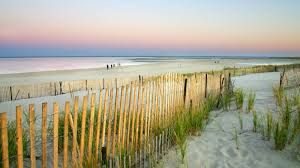 native plants grow on the sand dunes at this beach stock photo 12 of america u0027s best national park beaches national parks