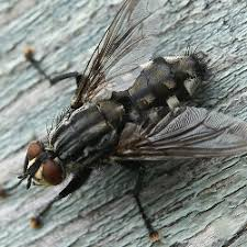 Getting Rid Of Flies In Backyard Fly Control How To Get Rid Of Flies By Type And Species Of Fly