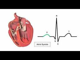 Heart Anatomy Youtube 253 Best About The Heart Images On Pinterest Nursing Schools