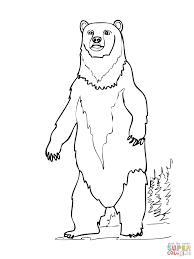 brown bear standing up coloring page free printable coloring pages