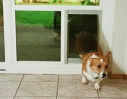 Dog Patio Pet Door Design Great Northern Window And Door