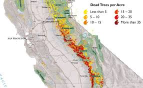 100 million dead trees a danger that persists long after the