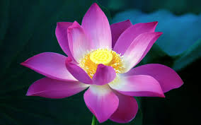 purple flowers 7005615