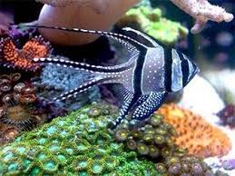 181 best coral fish images on tropical fish aquarium