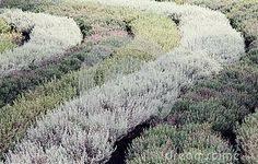 Garden Soil Types - garden soil type download from over 49 million high quality