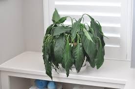 how i keep my house plants alive honey we u0027re home