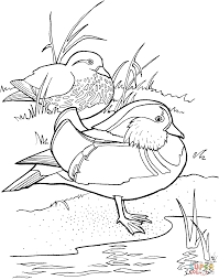 mandarin ducks coloring page free printable coloring pages