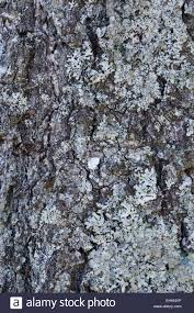 one tree stamm one a closeup picture beutiful very beutiful stock
