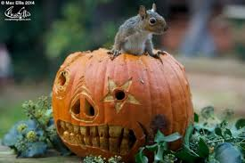 squirrels doing stuff it u0027s cute and funny photo gallery