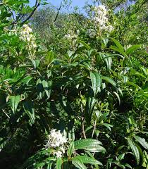 Florida Native Plants Pictures Landscaping With Florida Native Plants Blog Archive West Indian