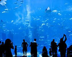 the new st louis aquarium is no cause for celebration arts blog