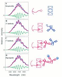 a porous silicon based optical interferometric biosensor science