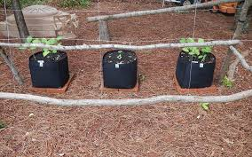 Planning A Square Foot Garden With Vegetables Amazon Com Ecogardener Grow Bags Square Foot Planter Raised Bed