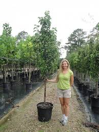 locate find wholesale plants plantant