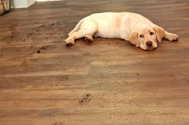 flooring best flooring for dogs hardwood floors pets and