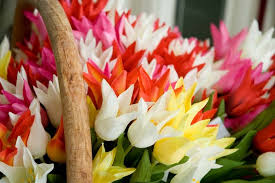image of spring flowers lily flowered tulips
