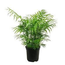 48 in indoor plants garden plants u0026 flowers the home depot