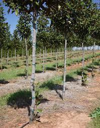 tree stakes tree stakes pelham alabama alabama wire inc