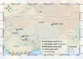 Himalayan Mountains Map Ancient Himalayan Wolf Open Science