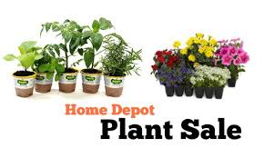 home depot spring black friday sale 2014 home depot plant sale annuals for 1 southern savers