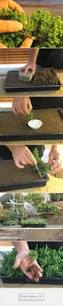 best 25 bonsai ideas on pinterest bonsai garden bonsai trees