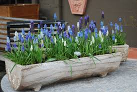 How To Create A Rock Garden by Garden Design Garden Design With How To Plant Flowering Bulbs