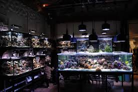 Lighting Stores Houston by Houston You Have A Reefkeeping Problem Aquanerd