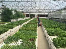 ceres greenhouse solutions linkedin